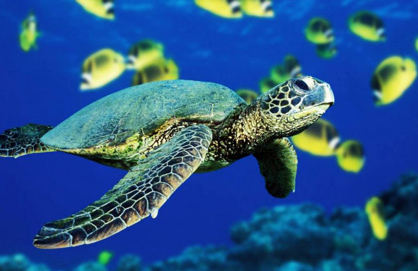 TRACKING DOWN ONE OF THE RAREST SEA CREATURES IN THE WORLD, THE HAWKSBILL TURTLE, ON KISH ISLAND, IRAN