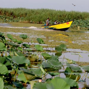 Anzali Lagoon, a Wonderful Journey into the Heart of Nature