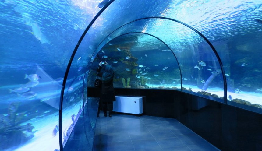 Isfahan Aquarium, Enjoyment of Observing Oceans in Historic City of Isfahan