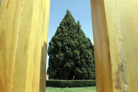The Cypress of Abarkuh in Yazd, Iran: One of the World's Oldest Trees